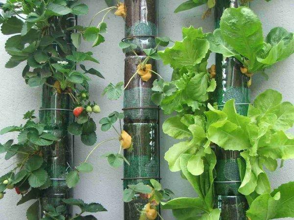 horta jardim e muito mais:CASA & DECORAÇÃO