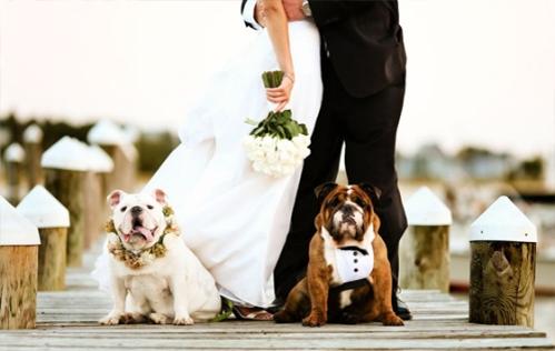 Vai casar Veja dicas para incluir seu pet na cerimônia